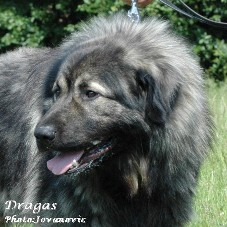 Dragas 2,5 years